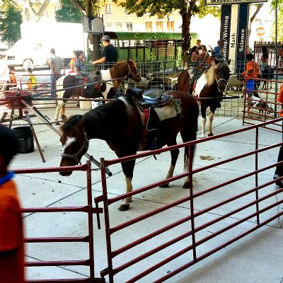 Pony-Rides-Chicago-Event-Rentals