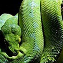 ReptileShow1
