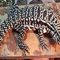 ReptileShow2