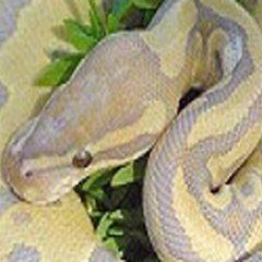 ReptileShow3