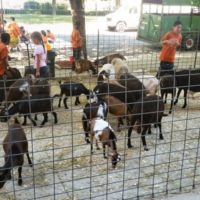 petting-zoo-chicago-party-rentals